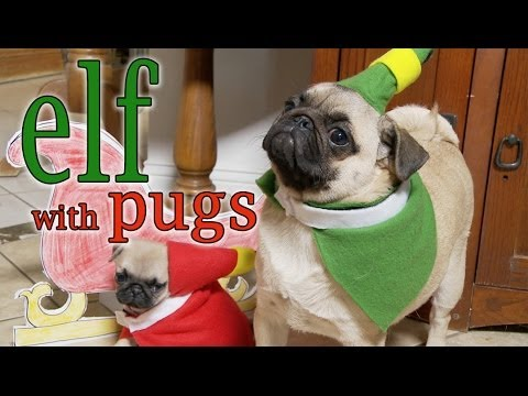 The Christmas Film 'Elf' Re-Enacted by Pugs & Narrated by a Little Boy