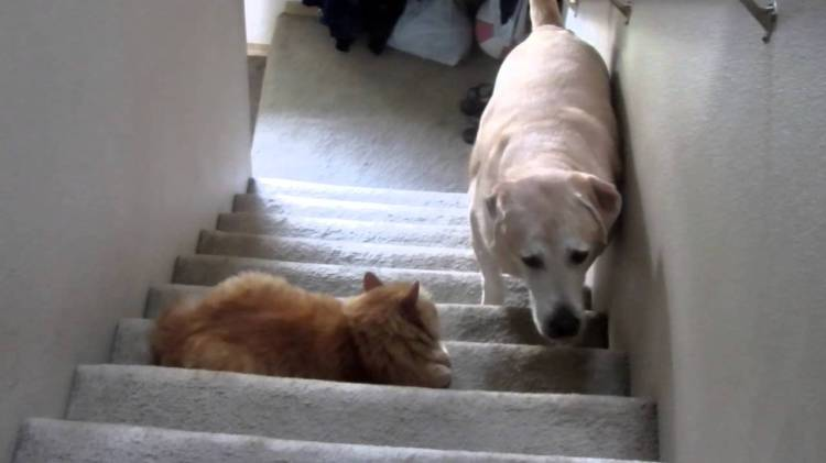 Dogs Afraid To Pass Cats