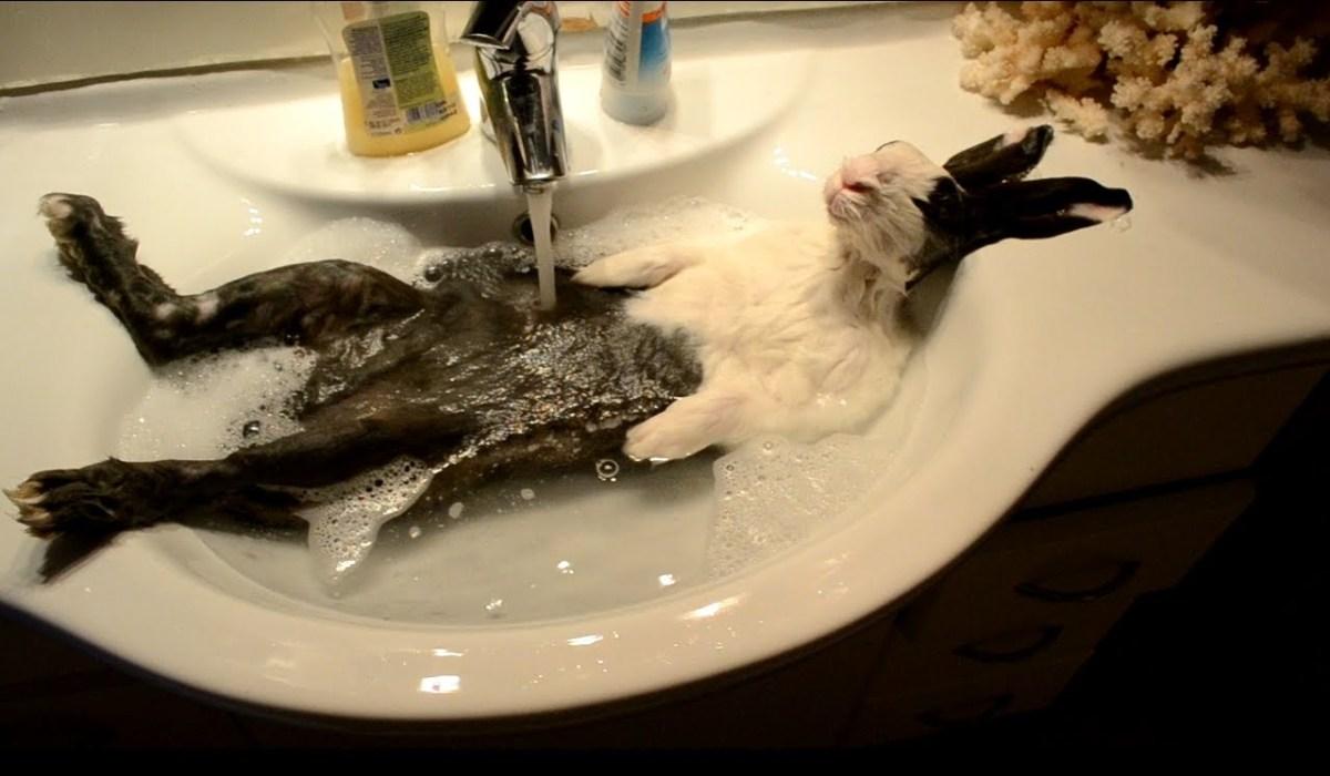 Cloody The Bunny Takes A Bath Jpg W 1200