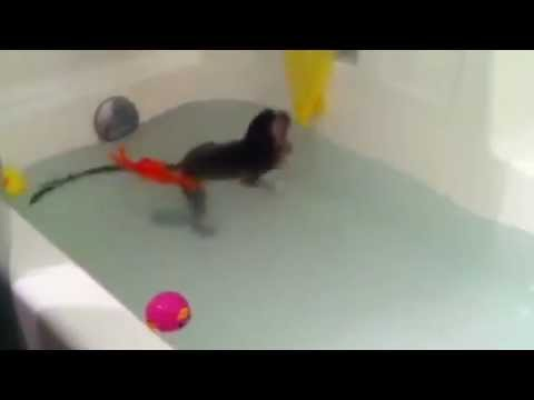 Cosmo the Baby Monkey Swims in the Bathtub for the Very First Time