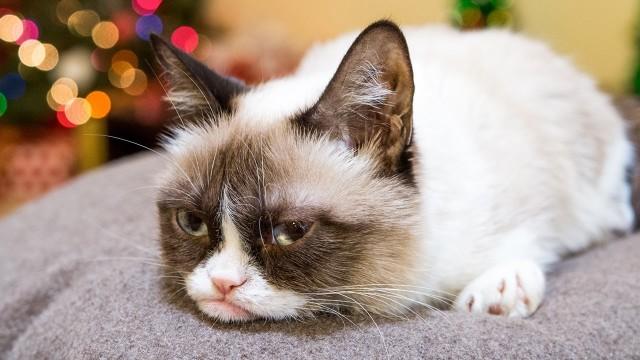 Friskies Wet Cat Food On Sale This Week