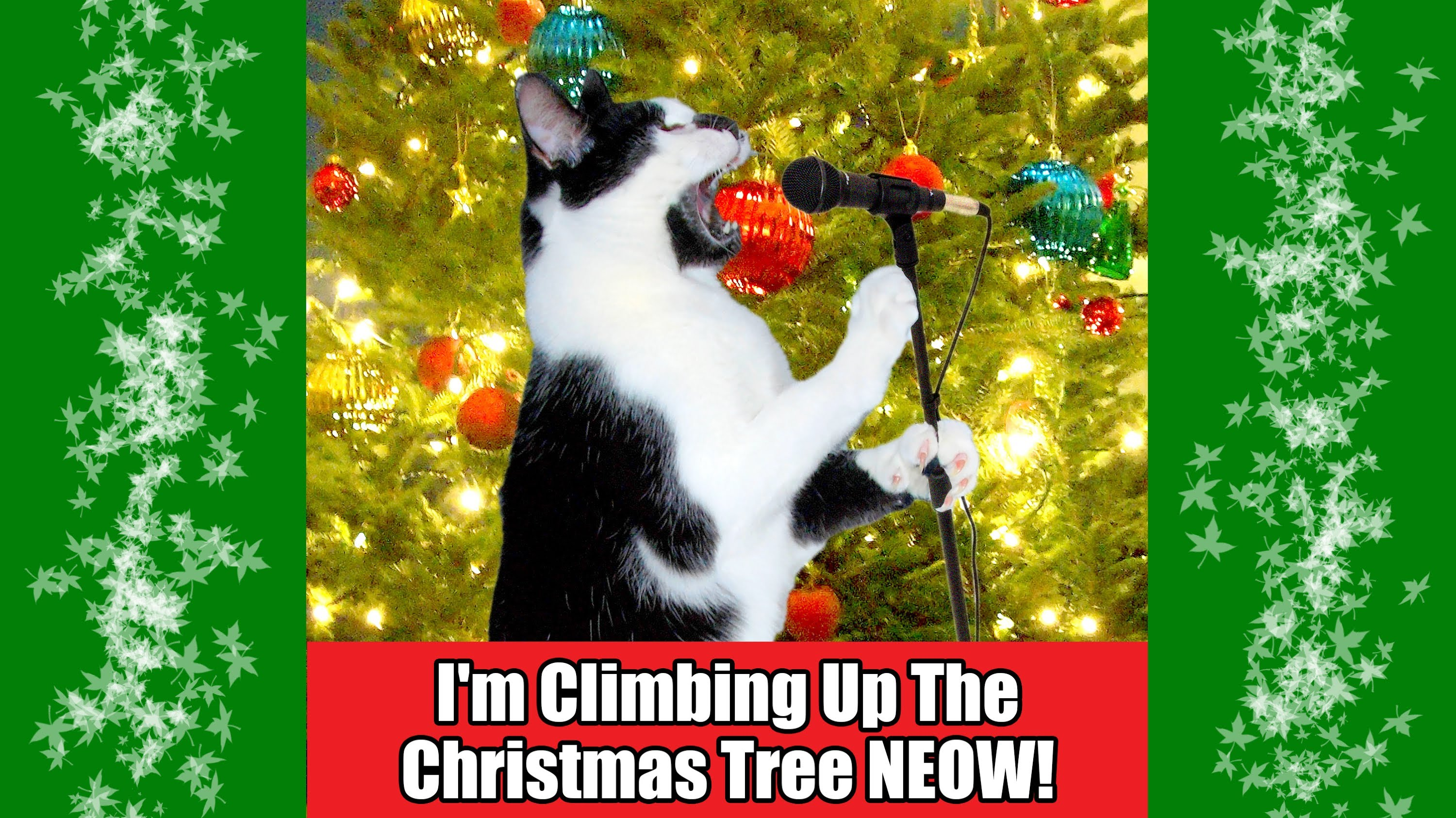 Im Climbing Up The Christmas