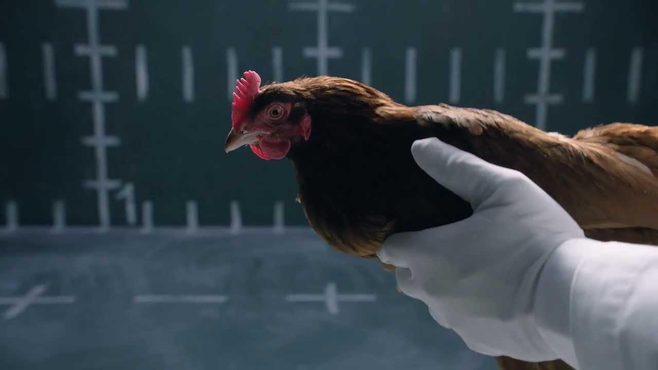 jaguar s parody of the mercedes chicken commercial. Black Bedroom Furniture Sets. Home Design Ideas