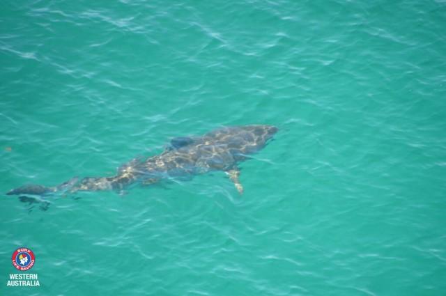 Sharks Announce Presence via Twitter