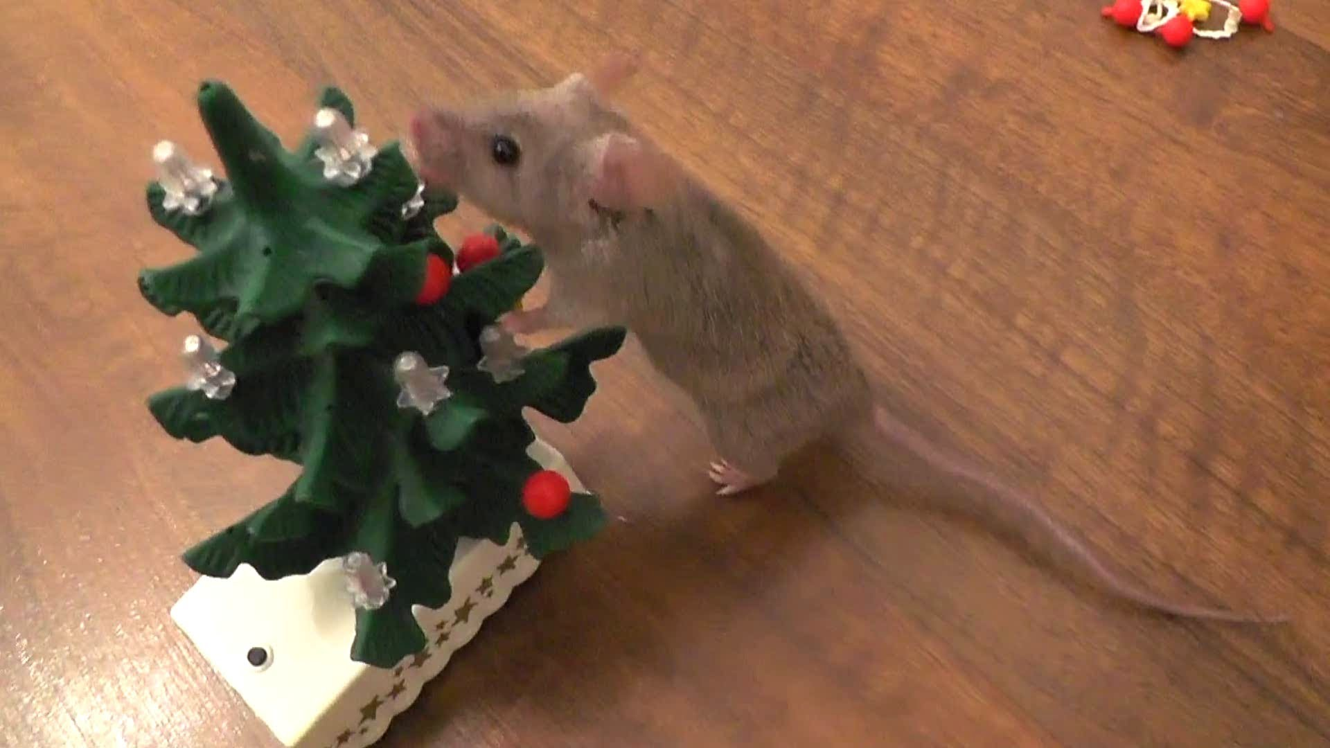 Trained Mice Decorate A Tiny