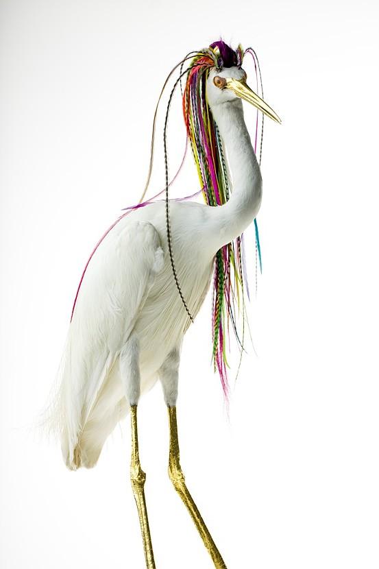 Bizarrely Augmented Taxidermy Bird Sculptures