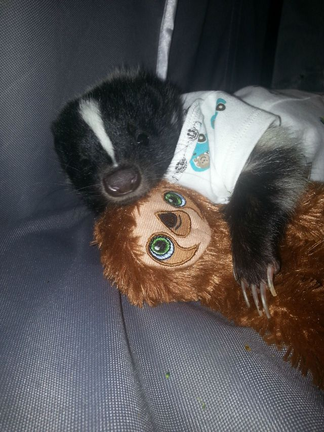 Stunky the Baby Skunk