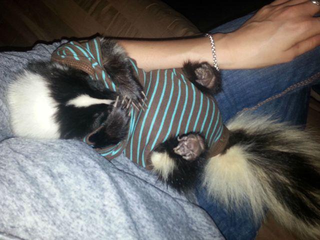 Stunky the Baby Skunk
