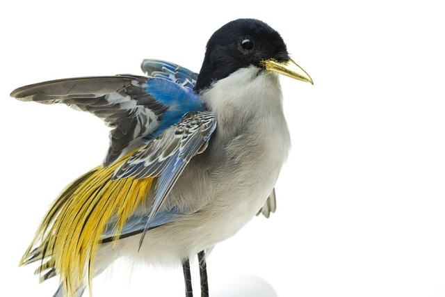 Bizarrely Augmented Taxidermy Bird Sculptures