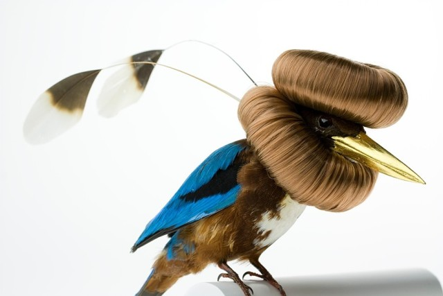 Bird Sculptures augmented taxidermy bird sculptures