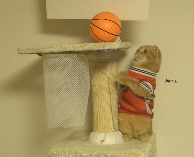 Marumo Playing Basketball