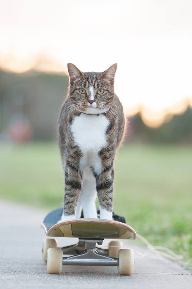 Didga the Cat Pulls Off Some Sick Tricks While Riding on a Remote-Controlled Skateboard