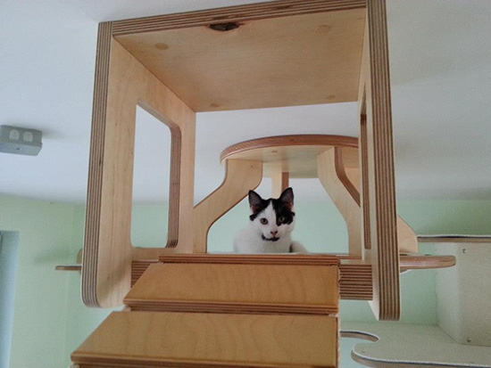 custom cat structures