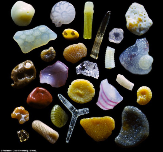 Magnified Sand from Maui