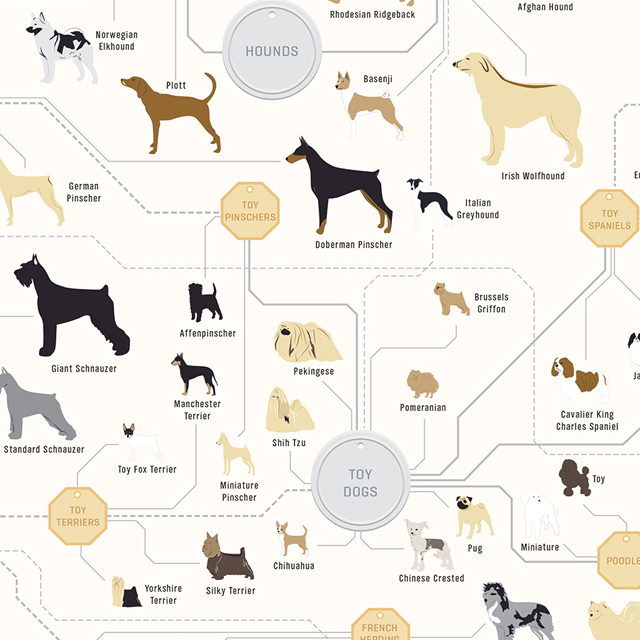 The Diagram Of Dogs By Pop Chart Lab  An Art Print