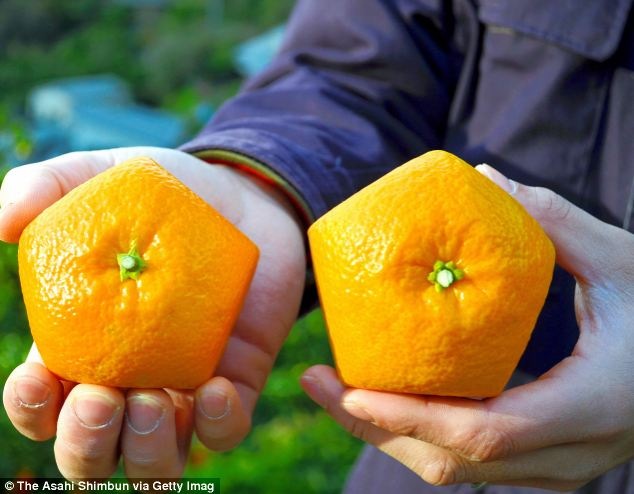 Pentagonal Shaped Iyokan Citrus