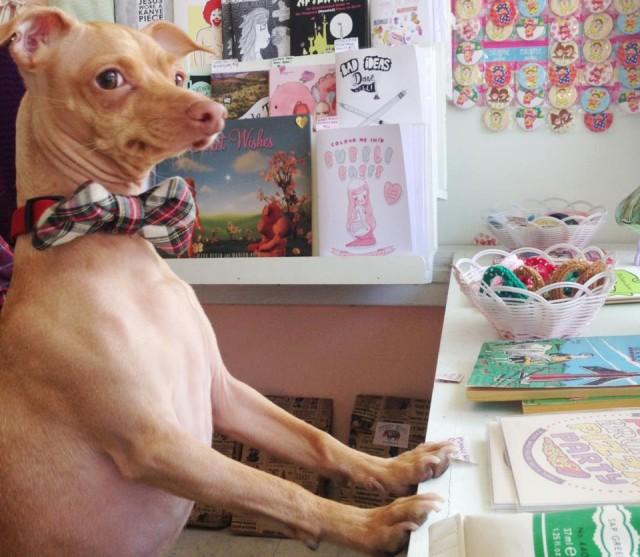 Tuna at His Desk