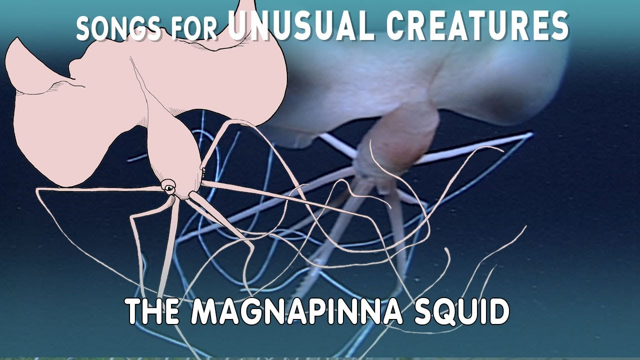 A Song For the Long-Armed Magnapinna Squid