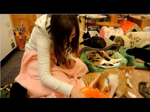 A Video Tour of Cat Cafes in Japan