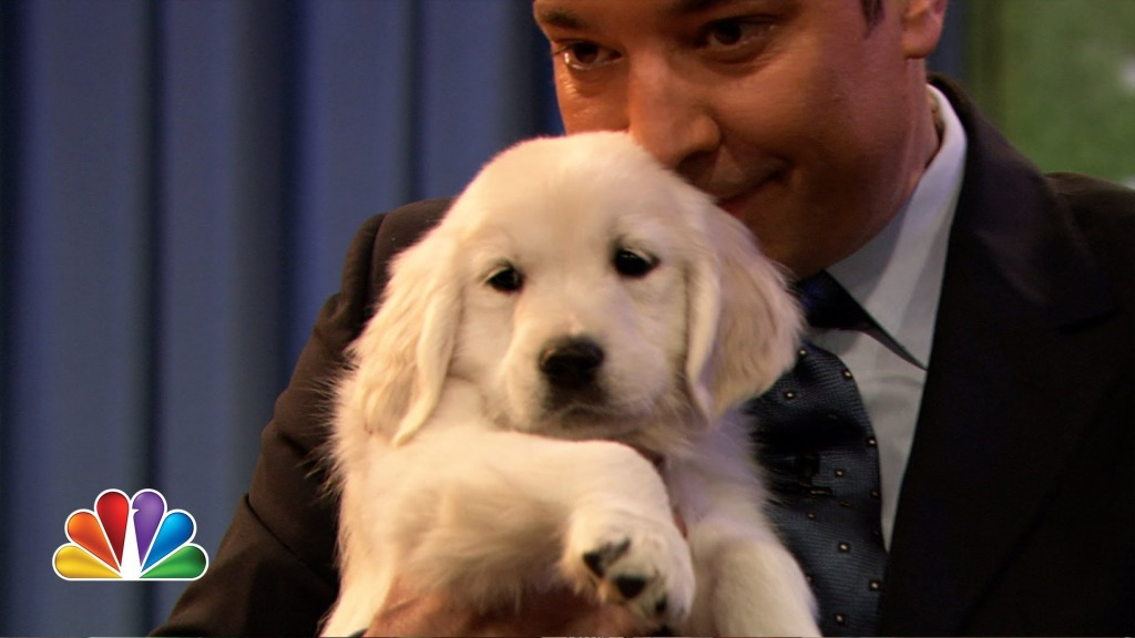 Adorable Puppies Predict the Winner of the Super Bowl on 'Late Night with Jimmy Fallon'