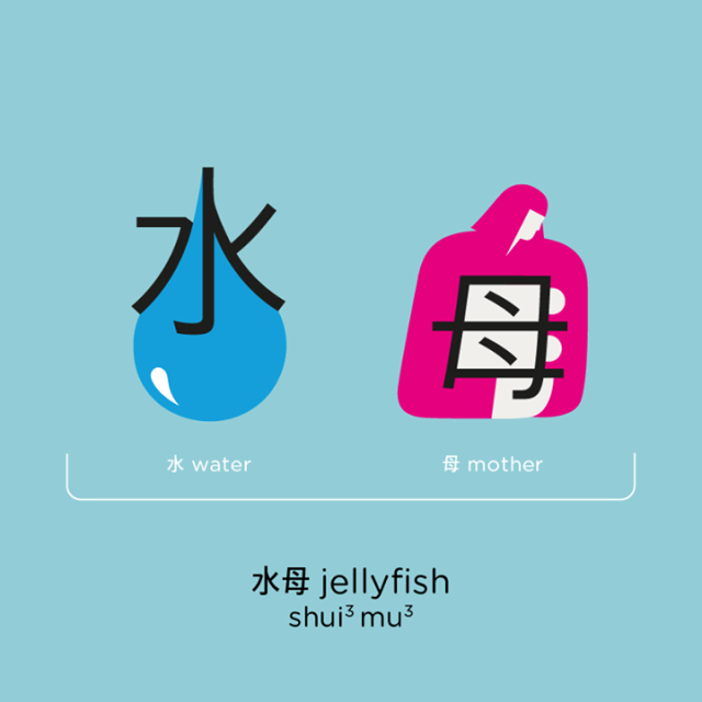 chineasyjellyfish