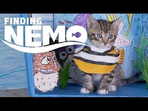 Disney Pixar's 'Finding Nemo' Remade with Cute Costumed Kittens