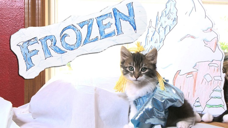 Disney's 'Frozen' Remade with Cute Kittens
