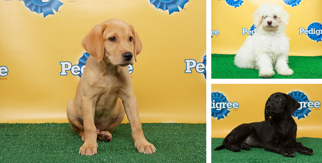 Puppy Bowl X Starting Lineup