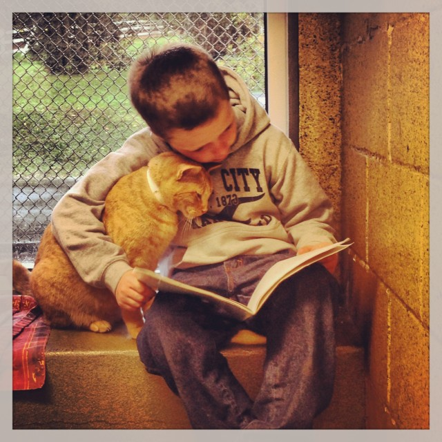 """Kids Read to Cats with the """"Book Buddies Program"""" at The Animal Rescue League of Berks County, Pennsylvania"""