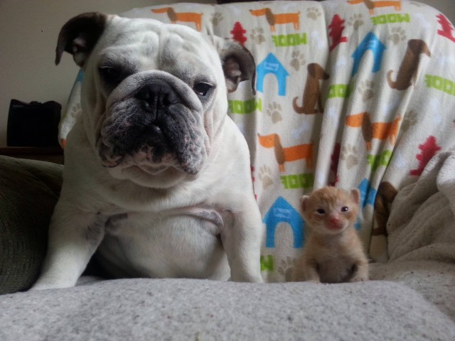 Hammie and Kitten