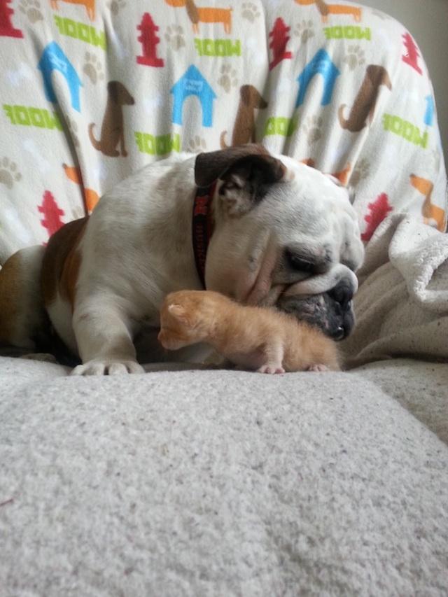 Hammie and 1 Kitten