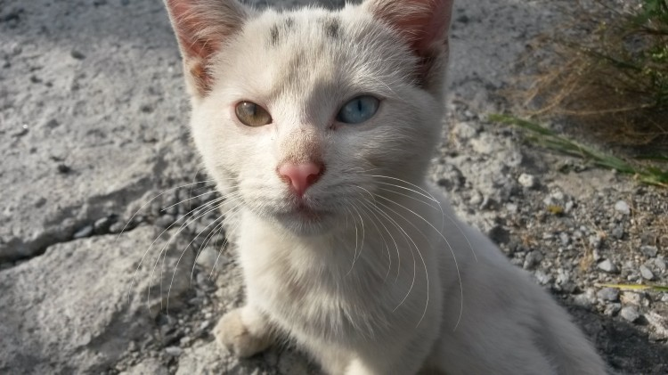 Cat names like luna / Benjamin netanyahu