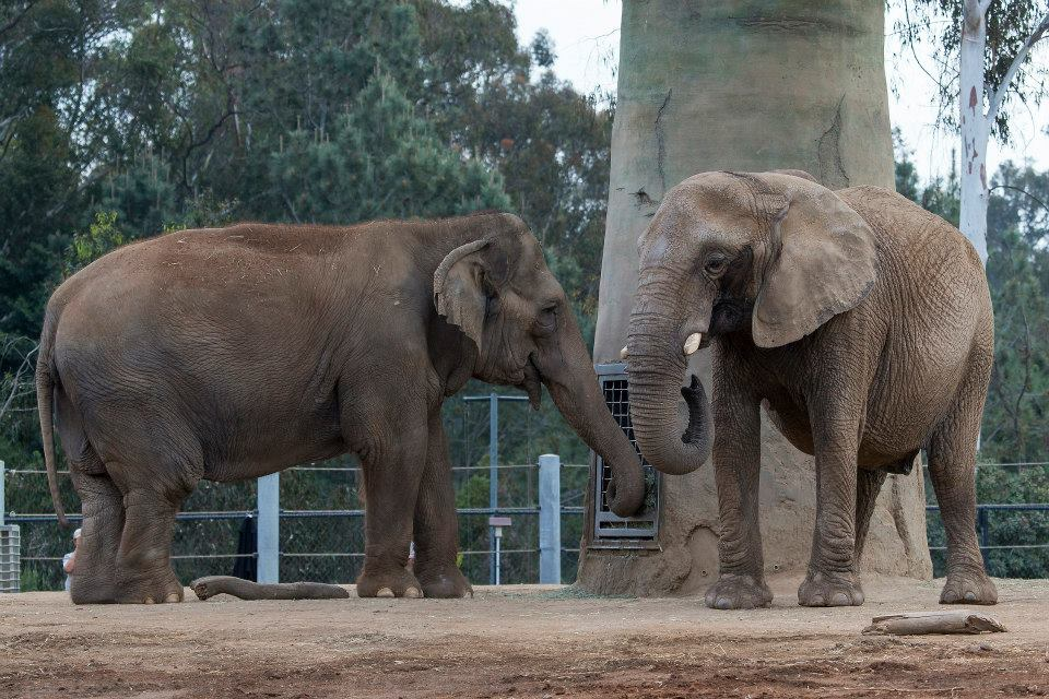 A Zoo Keeper's Dream Realized, Mila the Elephant Finally Meets Another Elephant for the First Time in 37 Years
