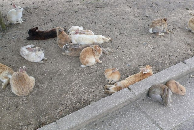 Wild Rabbits of Rabbit Island