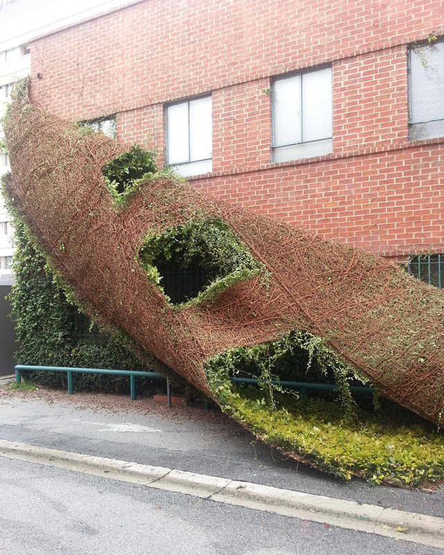 A Climbing Plant Peeling Off A Building Like A Snake Skin