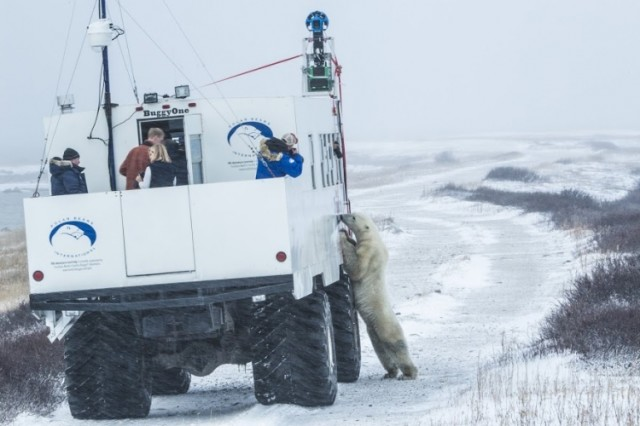 Google Maps Polar Bear Trekker