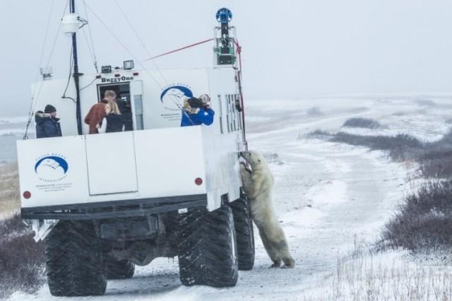 Google Maps Polar Bear Trekker