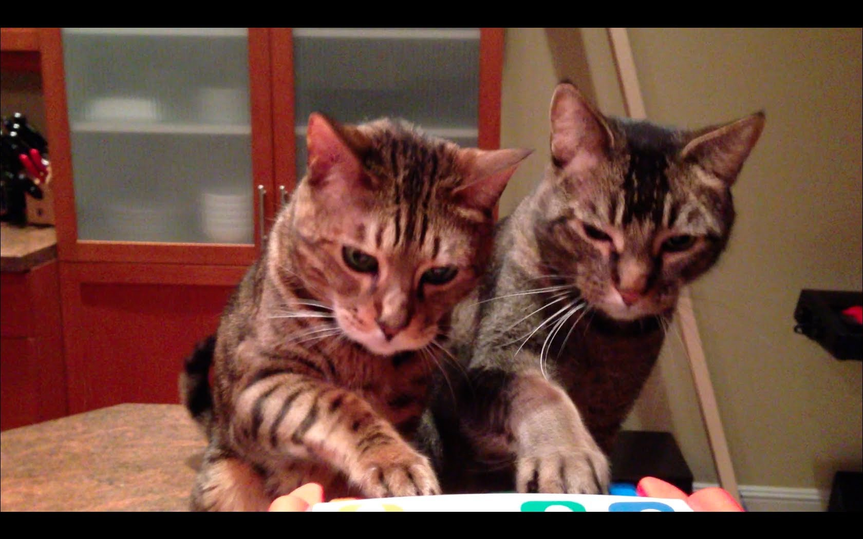 Pair of Trained Cats Perform A Charming Piano Duet