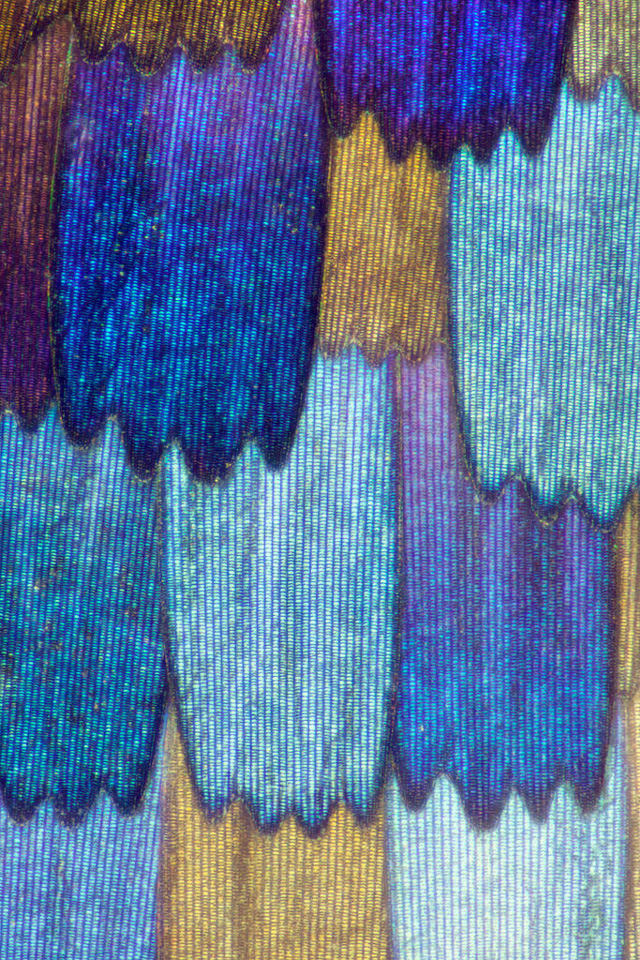 Macro Photos of Butterfly Wings