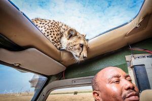 Cheetah and Safari Guide