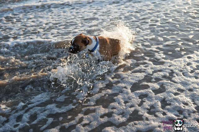 Duncan At The Beach