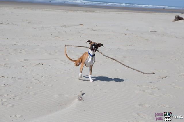 Duncan On the Beach