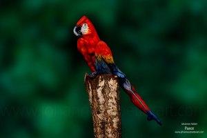Parrot by Johannes Stötter