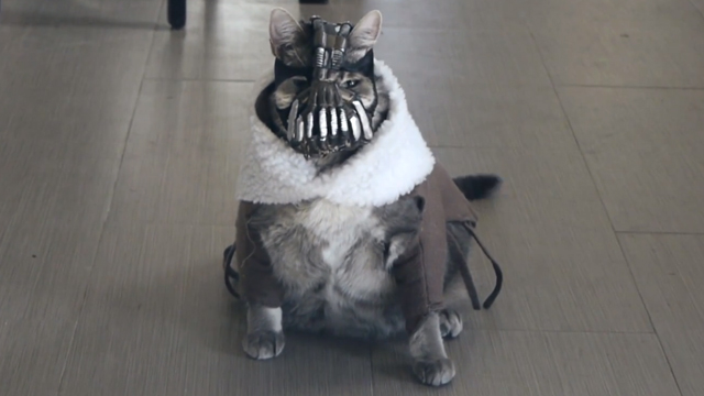 Bane Cat, A Feline Dressed up as Bane From 'The Dark Knight Rises' Who Torments His Owner