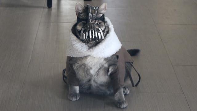 Bane Cat
