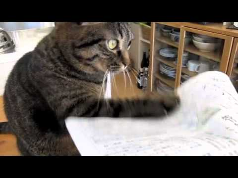 Cat Obsessively Taps At Anything Made Out of Paper