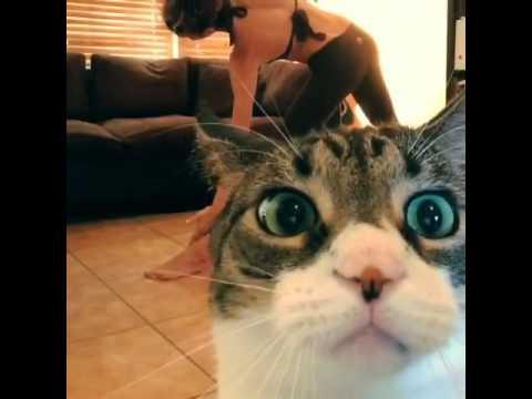 Cat Videobombs His Human's Yoga Routine