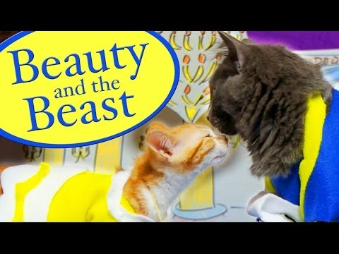 Disney's 1991 Animated Film 'Beauty and the Beast' Remade with Cute Costumed Kittens
