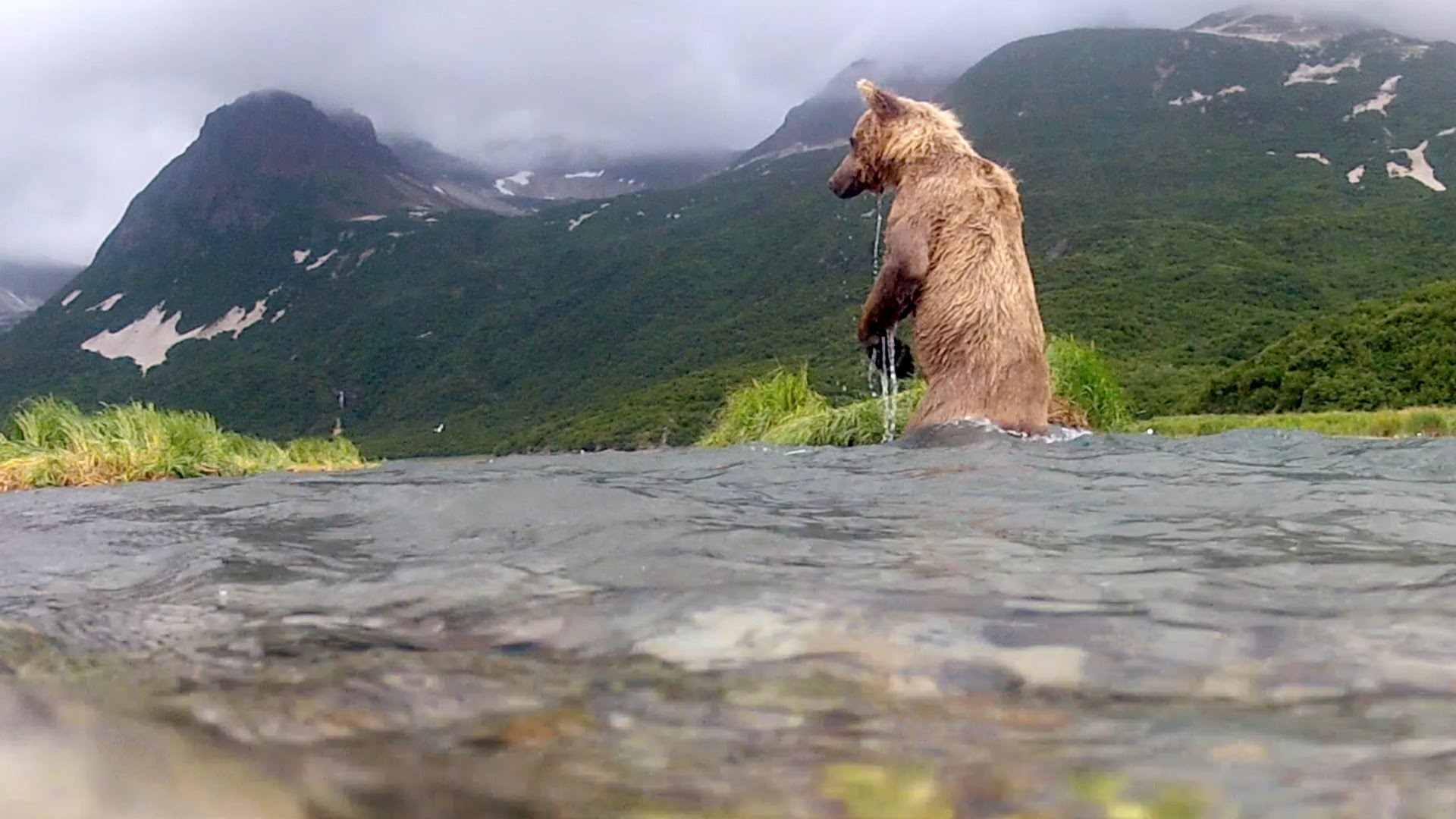 Remarkable Video of a Grizzly Bear Trying to Eat a GoPro Camera