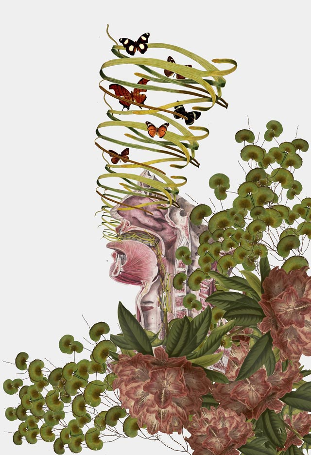 Surreal Anatomical Collages by Travis Bedel